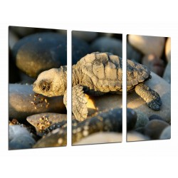 MULTI Wood Printings, Picture Wall Hanging, Animal baby of Turtle in Stones of Playa